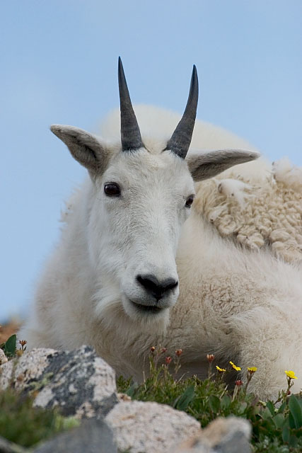 Facts About Alpine Tundra Animals